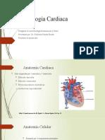Fisiología Cardiaca 2018