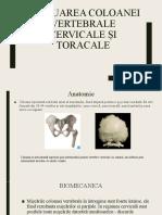 Evaluarea-coloanei-vertebrale-cervicale-și-toracale