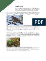 10 Aves Dominicanas.docx