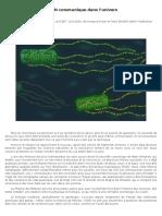 L'ADN communique dans l'univers.pdf