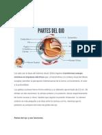 PARTE DE LOS SENTIDOS.pdf