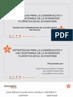 EXPOSICIÓN 1 - CLASIFICACIÓN DE LAS PLANTAS (2)