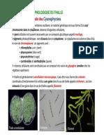 II. Organisation morphologique du thalle