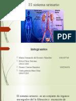 trabajo de fisiologia