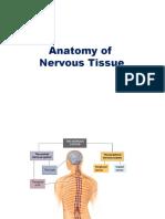 Nervous tissue (copy)