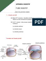-digestif-Embryologie-de-l'appareil-digestif