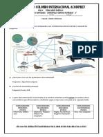 TALLER REDES TROFICAS.pdf