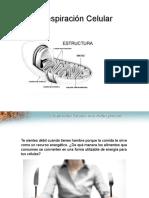respiracioncelular-