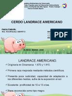 diapositivas landrace cerdo