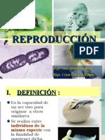 Reproducción ok