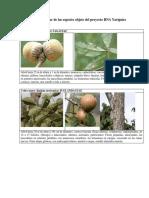 Catalogo especies de plantas
