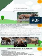 PPT.odphranirea taurilor de reproductie (1).odp