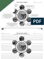Ciclul de viata la amfibieni - Fise de activitate alb-negru
