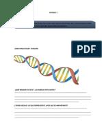 ADN introducción con actividades