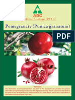 Pomagranate.pdf