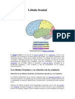 III h Lobulos frontal y temporal. Sindrome frontal