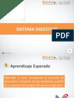 Sistema digestivo (1).pptx