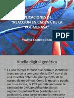 Aplicaciones de La Reacción en Cadena de La Polimerasa (RCP)