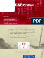 fisiologia del sistema urinario.pptx