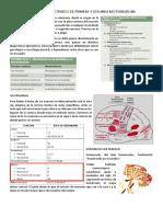 SINDROMES DEFICITARIOS DE PRIMERA Y SEGUNDA MOTONEURONA