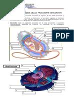 GUÍA DE TRABAJO N1 célula procarionte y eucarionte