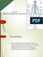 fisiologia_sistema_nervioso.ppt expo.ppt