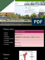 SEMANA 2 CLASE 1-2 radiologia urp
