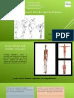 Estructura armonica del movimiento humano.pptx