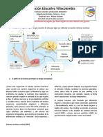 trabajo ciensias naturales TERMINADO - copia arceeeeeeeeeeeee (3)