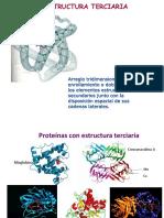 Estructuras terciaria y cuaternaria de las proteínas (1)