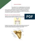 Anatomía del Hombro TP