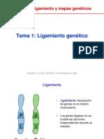 Unidad_2_Tema_1_Ligamiento.pdf