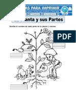 Ficha-de-la-Planta-y-sus-Partes-para-Primaria