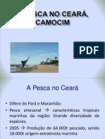A Pesca no Ceará, Camocim