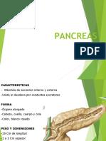 pancreas UPAL 2017 17 octubre y bazo (1)