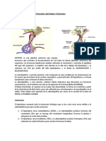 endocrinologia dr. carmona