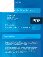Causes of Leg Problems in Layers