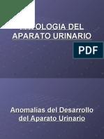 PATOLOGIA URINARIA.ppt