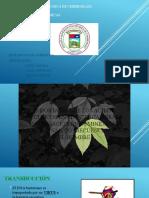 importancia y consecuencias del arn ade en la transferencia de informacion.pptx