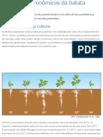 Princípios Agronômicos Da Batata _ Yara Brasil