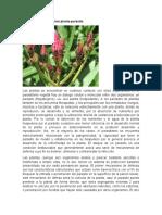 NATALIA PEREZ Fisiología de la Relación planta.docx