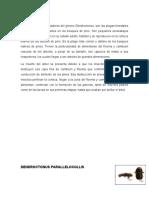 DESCORTEZADORES (dentroctonus pallelicls)