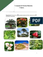 Guía naturales 1ro (plantas nativas)