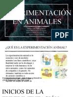 experimentacion en animales
