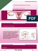 Fisiología del sistema reproductor femenino.pptx