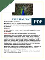 PAVO REAL IMPRIMIR.docx