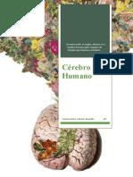 Trabalho de Psicologia B - Cérebro