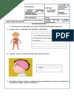 Guia Nº 8 CIENCIAS NATURALES  sistema nervioso
