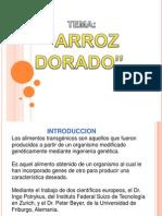 ESTUDIO DEL ARROZ DORADO TRANSGENICO Por
