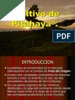 CULTIVO DE PITAHAYA Por